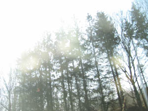 skov-i-fart.jpg