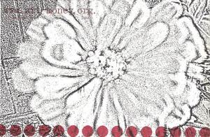 am-m-blomst