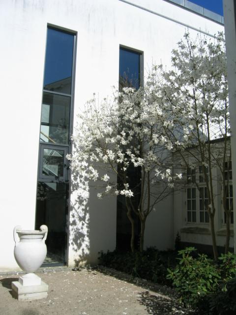 kcsb-magnolia-april-09-015