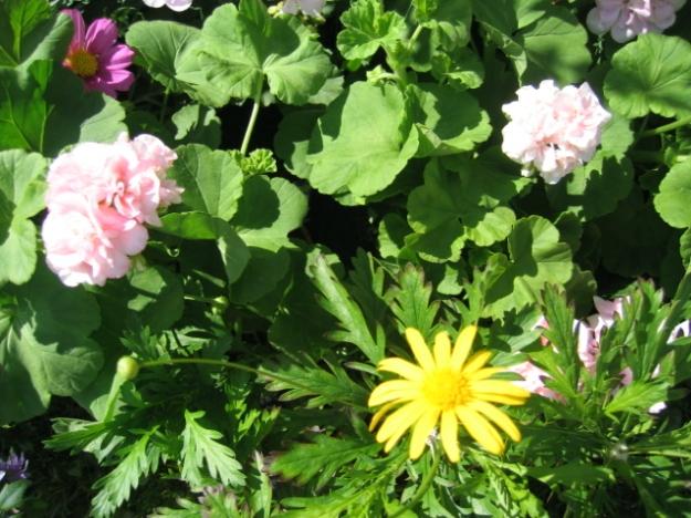 Sommerblomster 2009 010