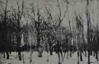I forbifarten - skoven II klar